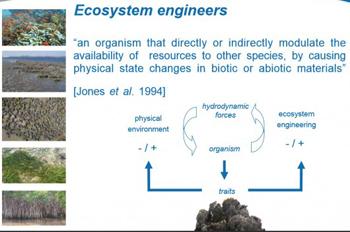 Ecoshape-slide