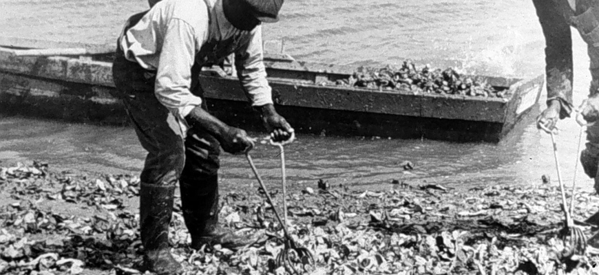 oystering